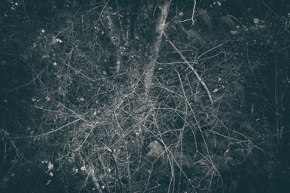 The Secret Language of Trees Week 8, November_20171123_0005_1BW toned.jpg