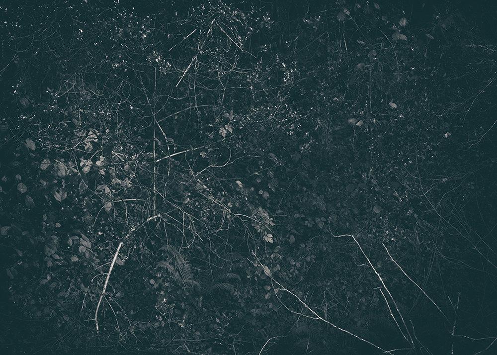 The Secret Language of Trees Week 8, November_20171123_0015BW toned.jpg