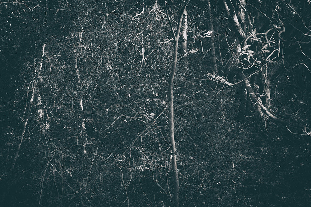 The Secret Language of Trees Week 8, November_20171123_0021_1BW toned.jpg