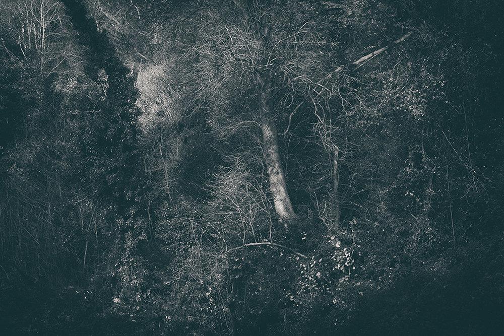 The Secret Language of Trees Week 8, November_20171123_0030_4BW toned.jpg