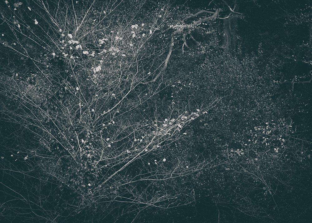 The Secret Language of Trees Week 8, November_20171123_0035BW toned.jpg