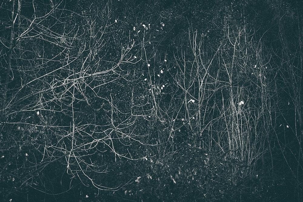 The Secret Language of Trees Week 8, November_20171123_0042_1BW toned.jpg