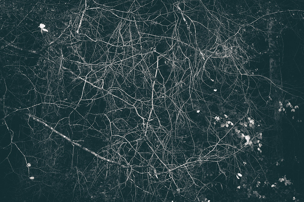 The Secret Language of Trees Week 8, November_20171123_0043_1BW toned.jpg