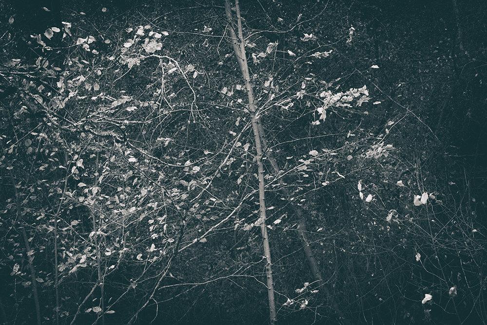The Secret Language of Trees Week 8, November_20171123_0050_1_1BW toned.jpg
