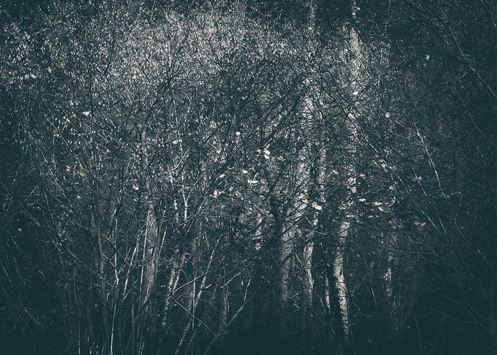 The Secret Language of Trees Week 8, November_20171123_0059_1BW toned.jpg