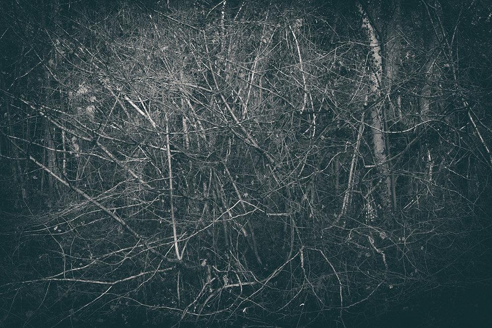 The Secret Language of Trees Week 8, November_20171123_0060_1_1BW toned.jpg