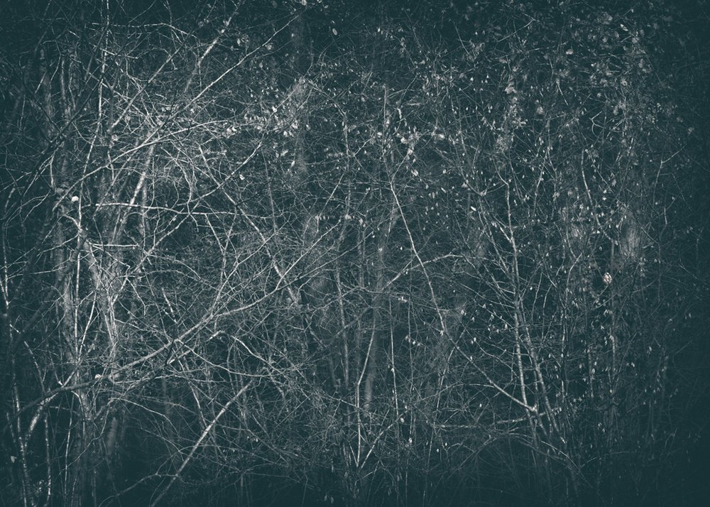 The Secret Language of Trees Week 8, November_20171123_0079_1.jpg