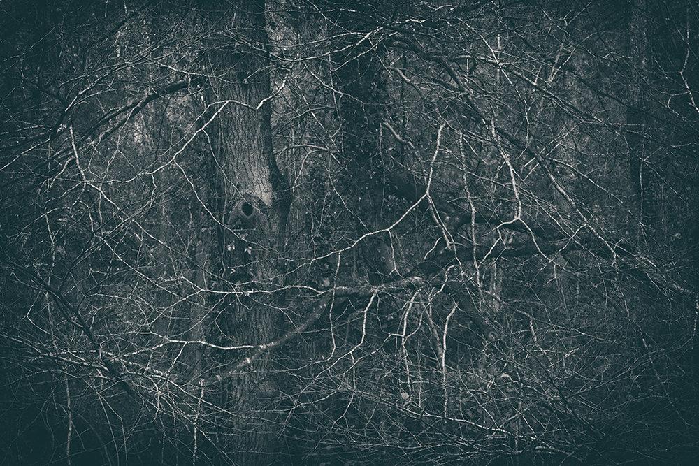 The Secret Language of Trees Week 8, November_20171123_0070_1BW toned.jpg