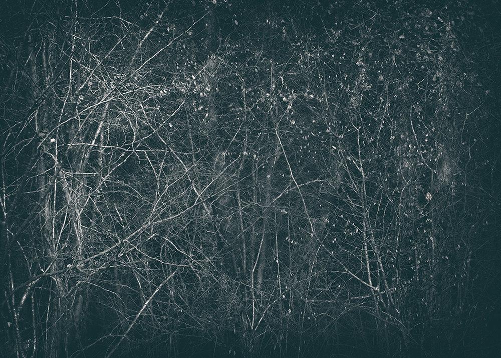 The Secret Language of Trees Week 8, November_20171123_0079_1BW toned.jpg