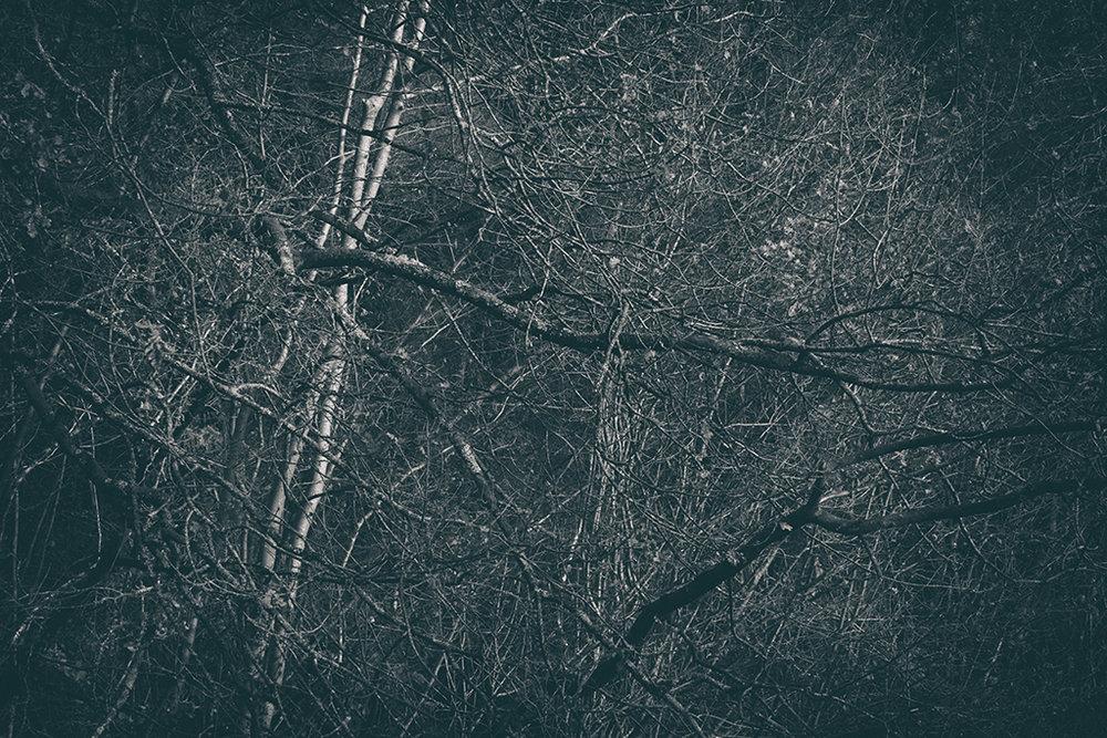The Secret Language of Trees Week 8, November_20171123_0088BW toned.jpg