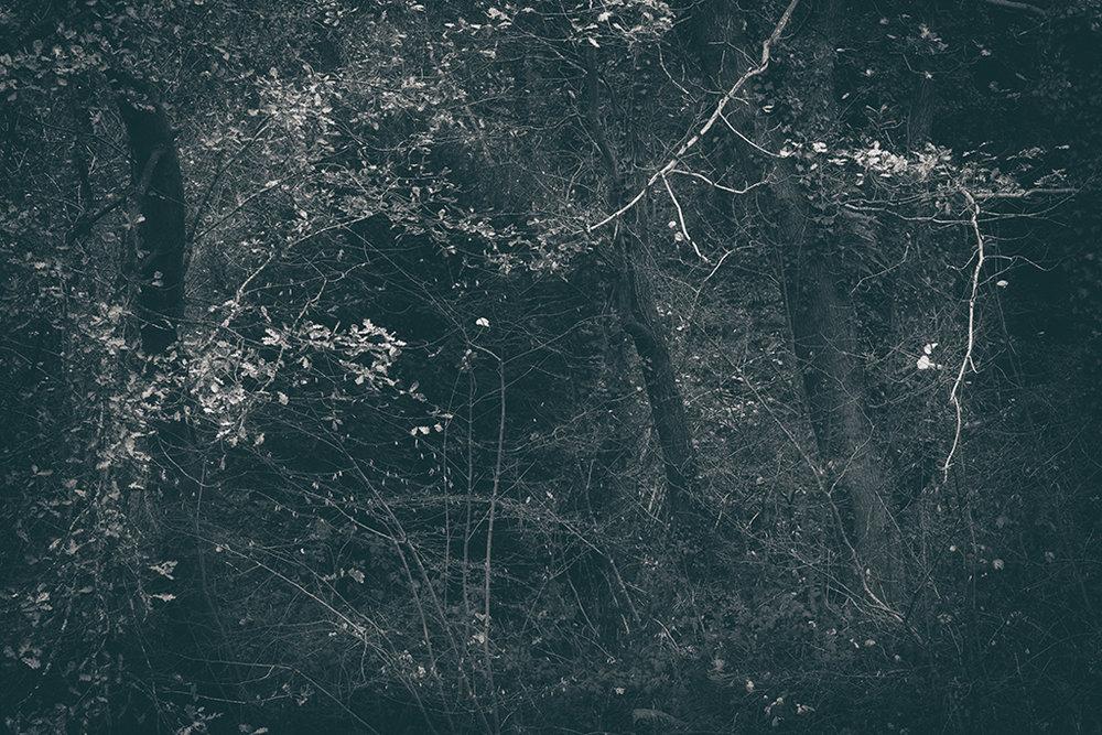 The Secret Language of Trees Week 8, November_20171123_0092BW toned.jpg