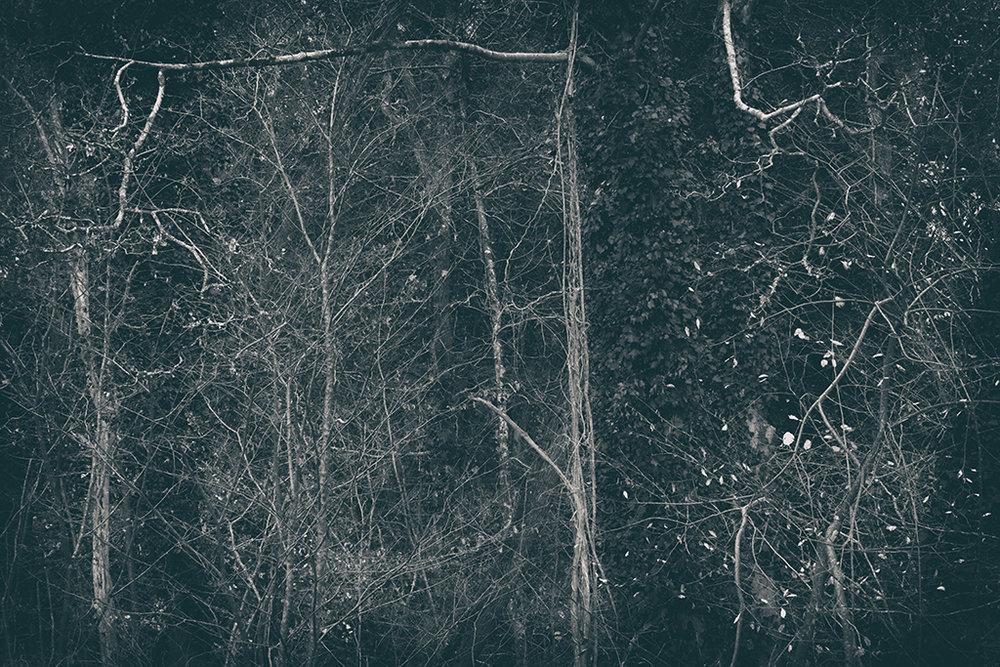 The Secret Language of Trees Week 8, November_20171123_0099BW toned.jpg