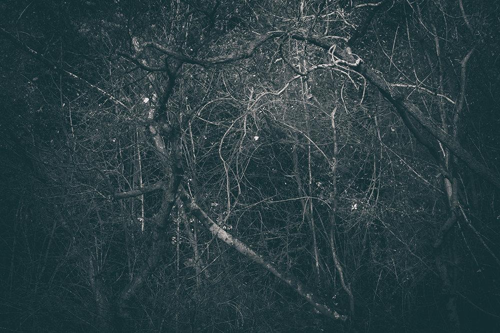The Secret Language of Trees Week 8, November_20171123_0122BW toned.jpg