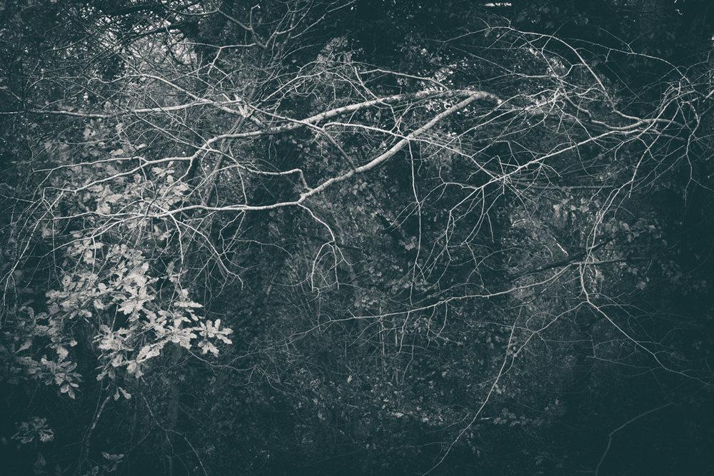 The Secret Language of Trees Week 8, November_20171123_0132_1.jpg