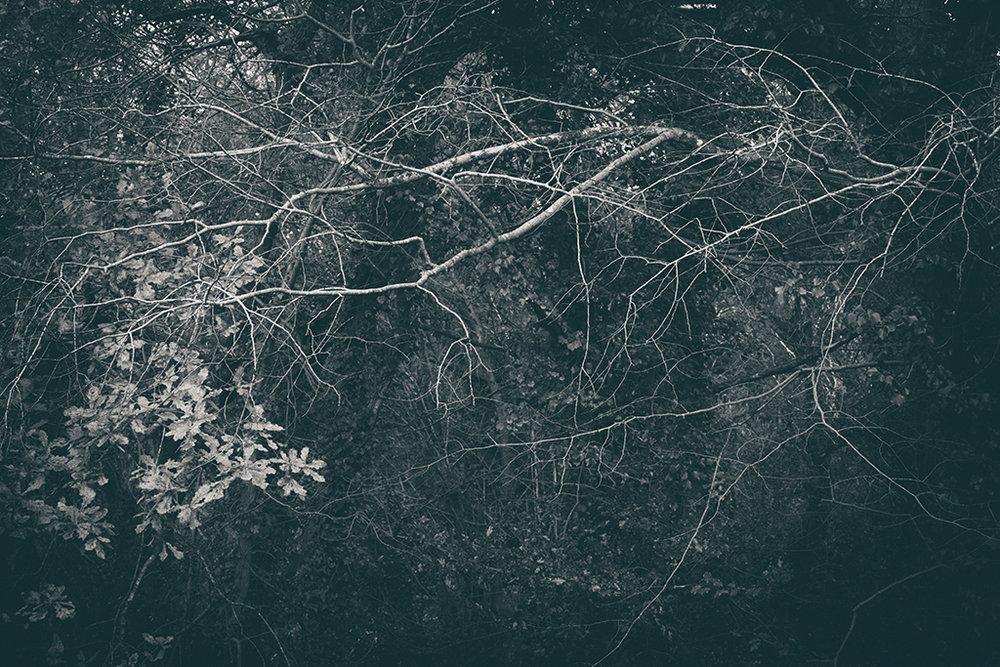 The Secret Language of Trees Week 8, November_20171123_0132_1BW toned.jpg