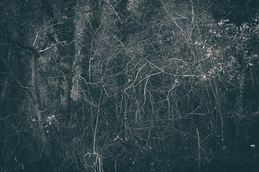 The Secret Language of Trees Week 8, November_20171123_0134_1BW toned.jpg