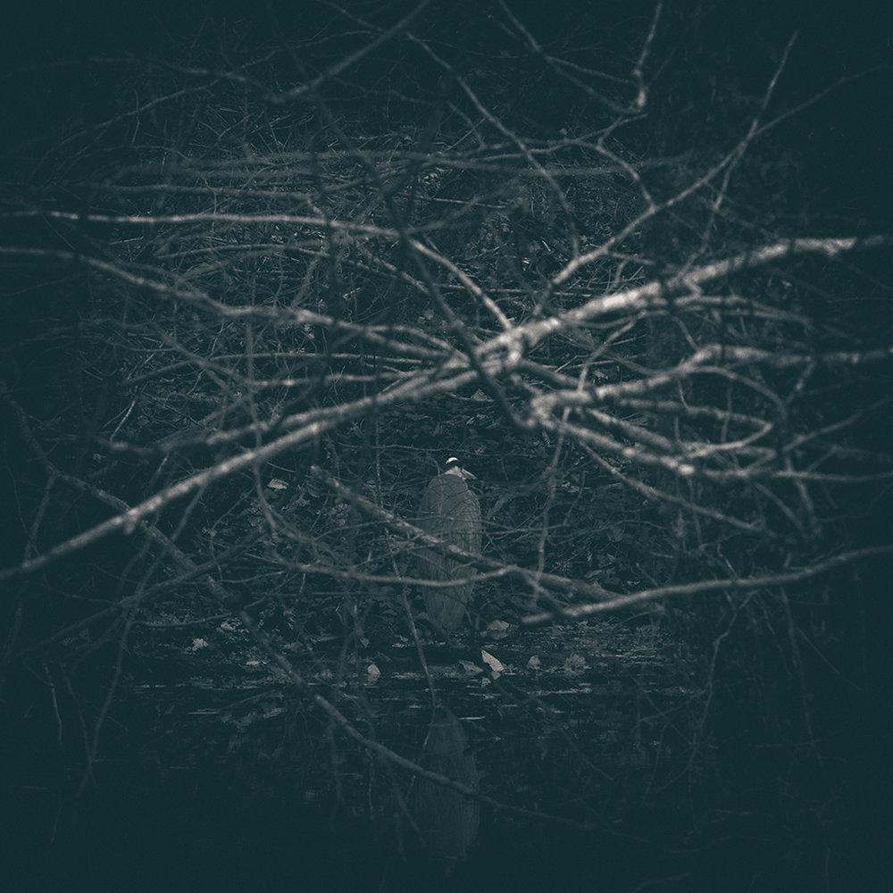 The Secret Language of Trees Week 8, November_20171123_0141_1BW toned.jpg