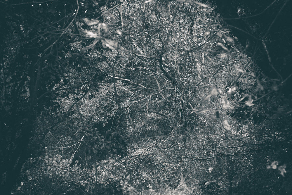 The Secret Language of Trees Week 8, November_20171123_0150.jpg