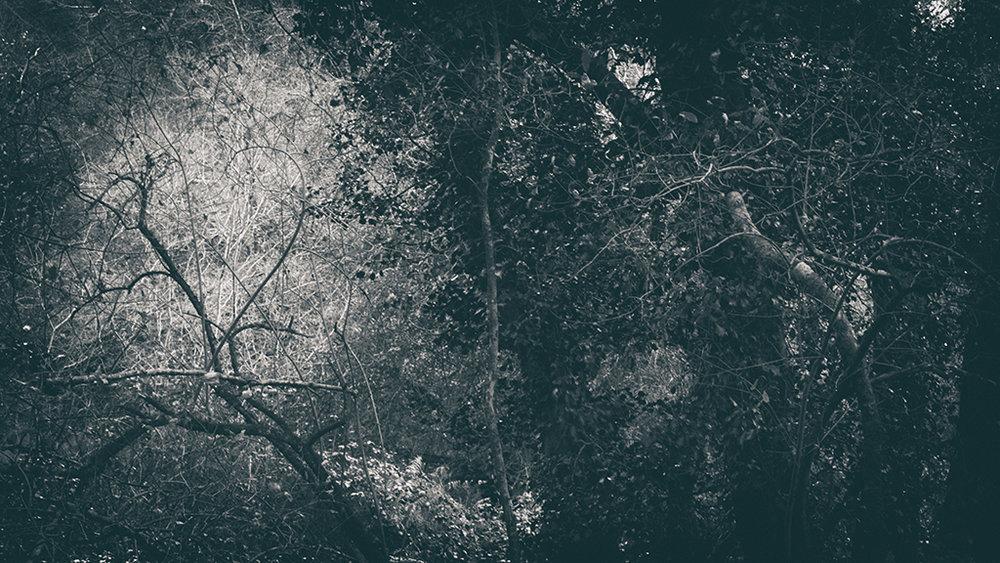 The Secret Language of Trees Week 8, November_20171123_0160_1BW toned.jpg