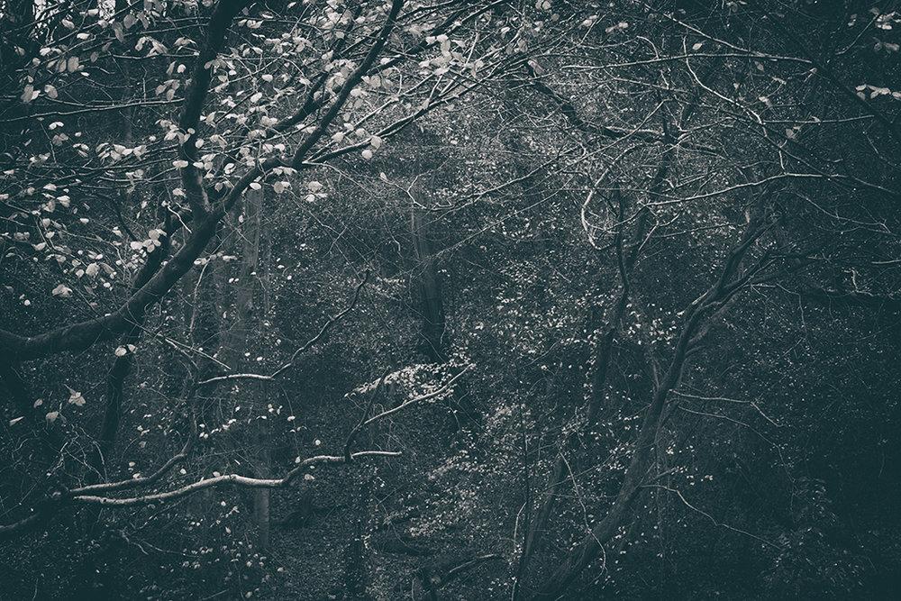 The Secret Language of Trees Week 8, November_20171123_0174_1BW toned.jpg