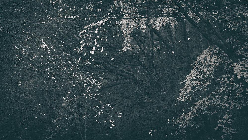 The Secret Language of Trees Week 8, November_20171123_0182BW toned.jpg