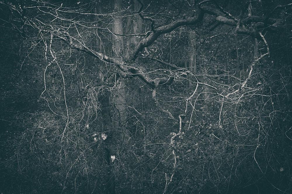 The Secret Language of Trees Week 8, November_20171123_0187_1BW toned.jpg