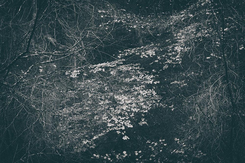 The Secret Language of Trees Week 8, November_20171123_0189BW toned.jpg