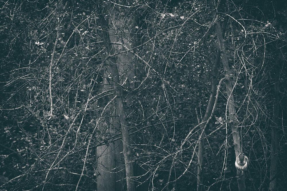 The Secret Language of Trees Week 8, November_20171123_0205_1BW toned.jpg