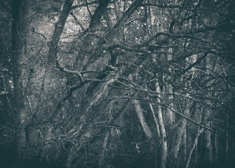 The Secret Language of Trees Week 8, November_20171123_0218_1.jpg