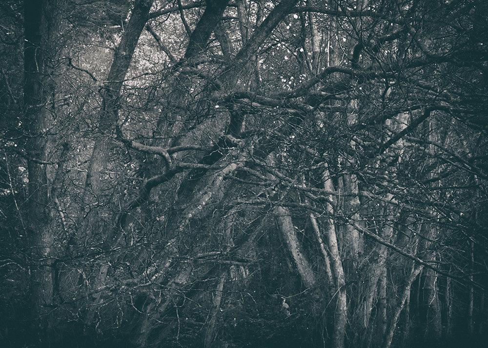 The Secret Language of Trees Week 8, November_20171123_0218_1BW toned.jpg