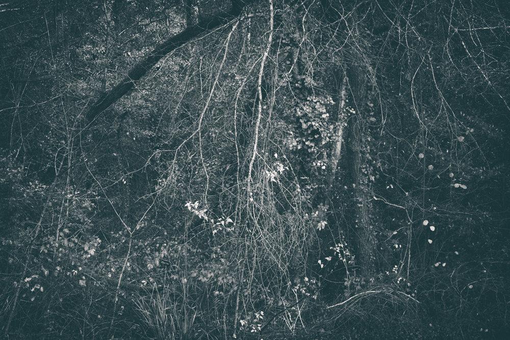 The Secret Language of Trees Week 8, November_20171123_0224_1.jpg