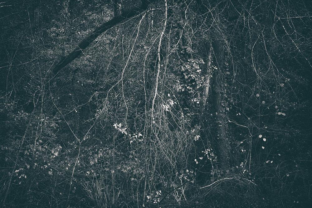 The Secret Language of Trees Week 8, November_20171123_0224_1BW toned.jpg