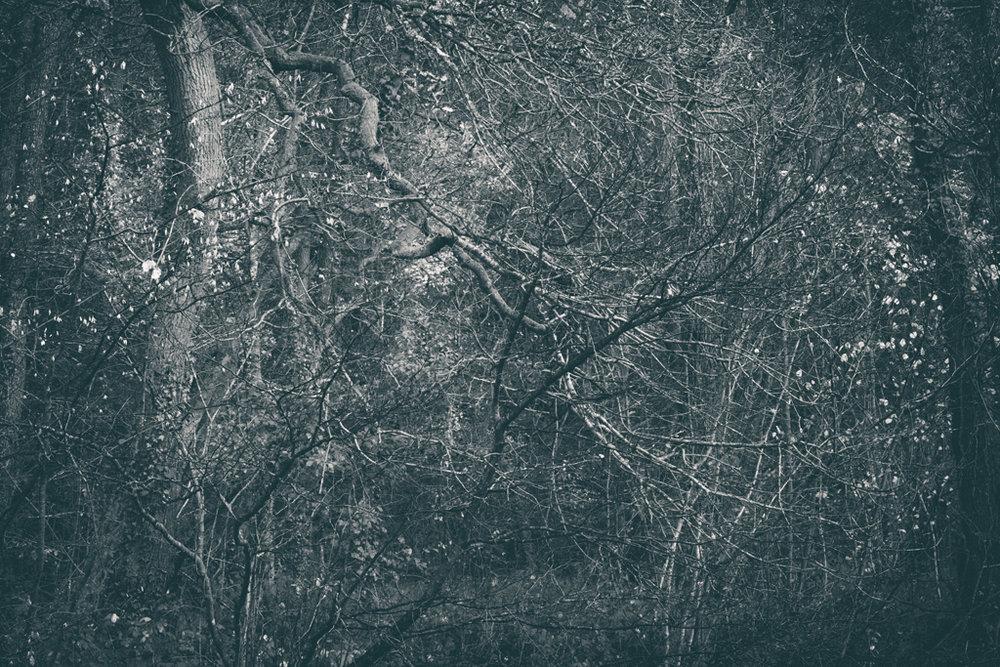 The Secret Language of Trees Week 8, November_20171123_0225_1.jpg