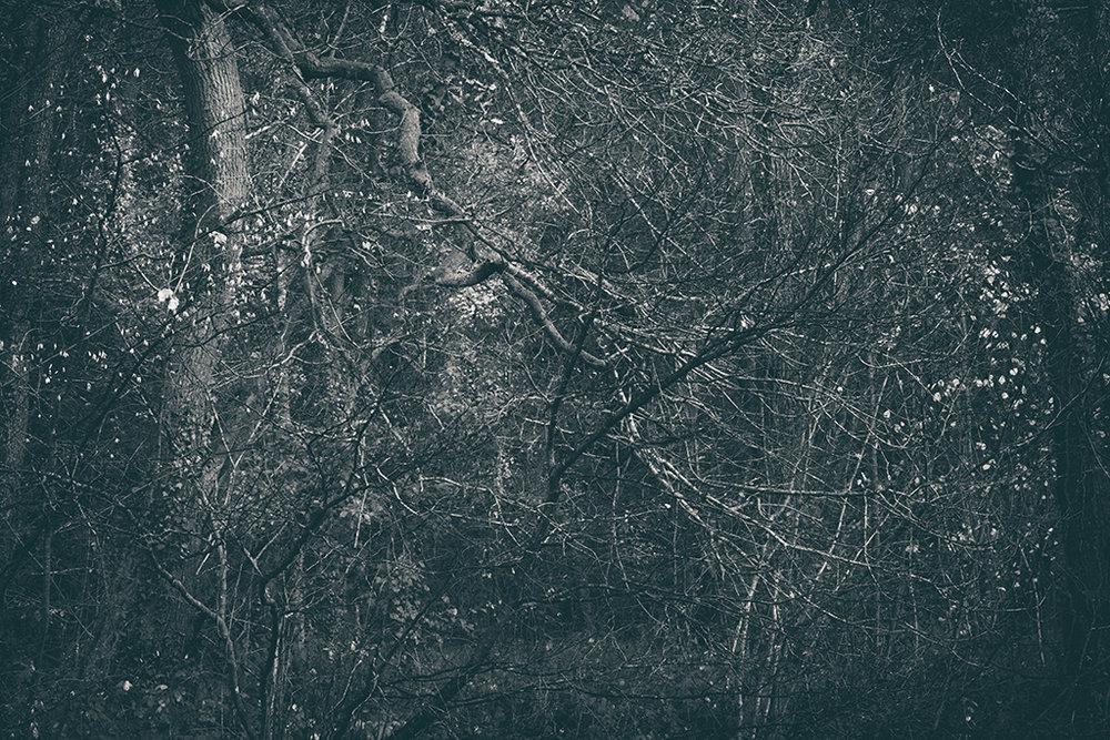 The Secret Language of Trees Week 8, November_20171123_0225_1BW toned.jpg