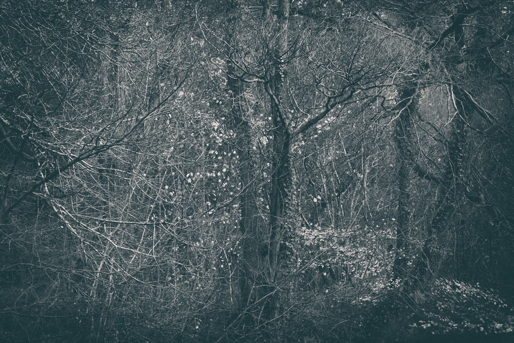 The Secret Language of Trees Week 8, November_20171123_0226.jpg