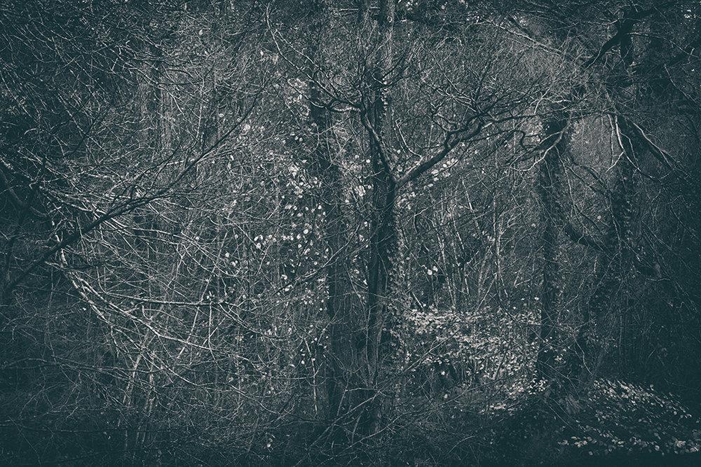 The Secret Language of Trees Week 8, November_20171123_0226BW toned.jpg