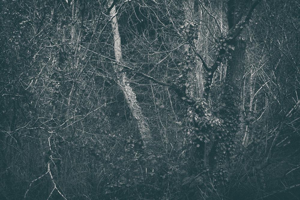 The Secret Language of Trees Week 8, November_20171123_0227_1.jpg