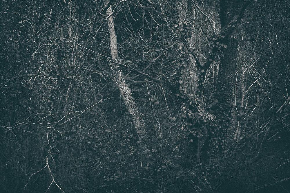 The Secret Language of Trees Week 8, November_20171123_0227_1BW toned.jpg