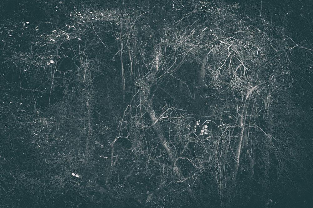 The Secret Language of Trees Week 8, November_20171123_0237_1.jpg