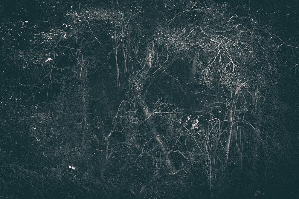 The Secret Language of Trees Week 8, November_20171123_0237_1BW toned.jpg