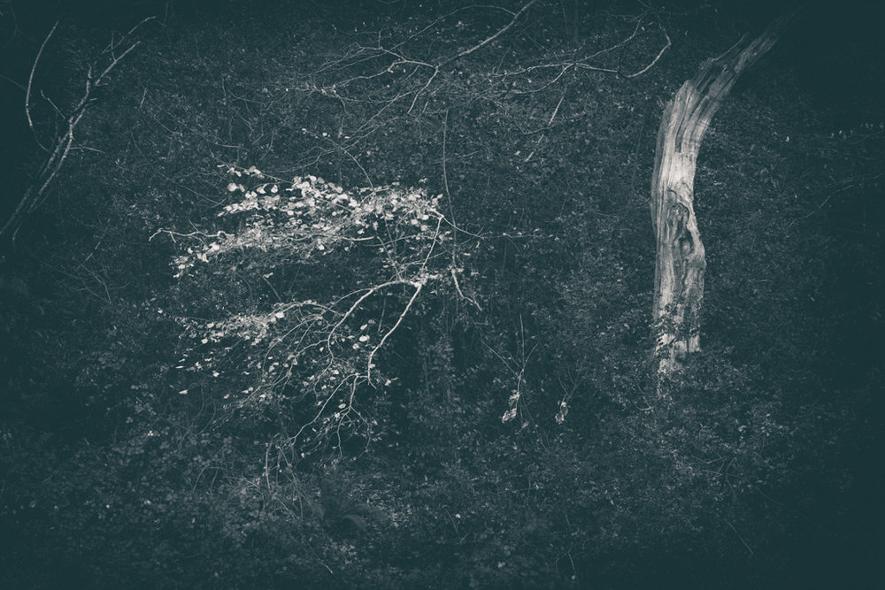 The Secret Language of Trees Week 8, November_20171123_0245.jpg