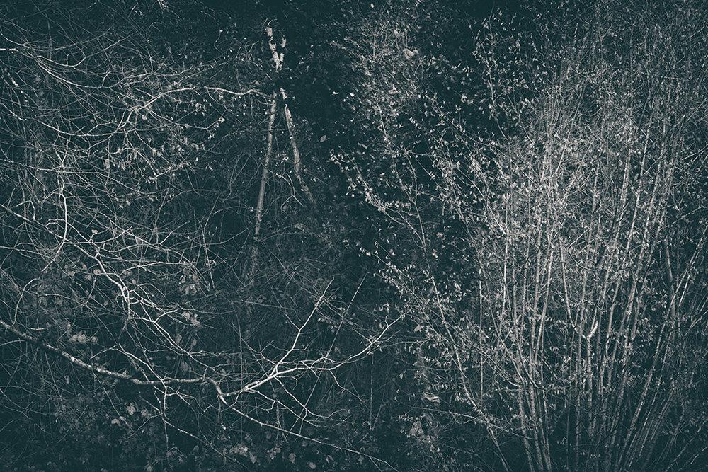 The Secret Language of Trees Week 8, November_20171123_0240_1BW toned.jpg