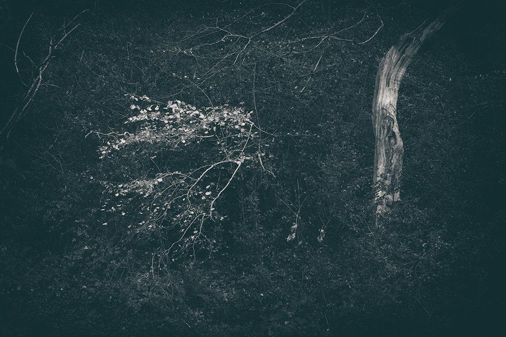 The Secret Language of Trees Week 8, November_20171123_0245BW toned.jpg