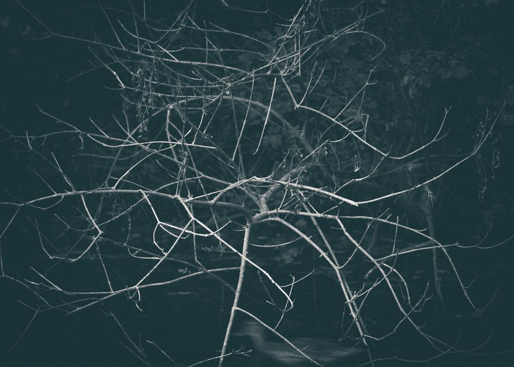 The Secret Language of Trees_20171005_0113_1.jpg