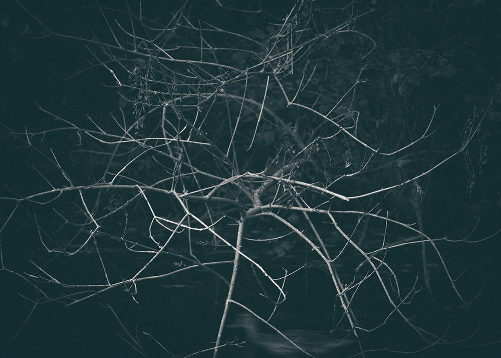 The Secret Language of Trees_20171005_0113_1BW toned.jpg