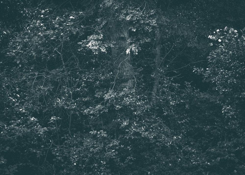 The Secret Language of Trees, week 2 October_20171013_0019_1.jpg