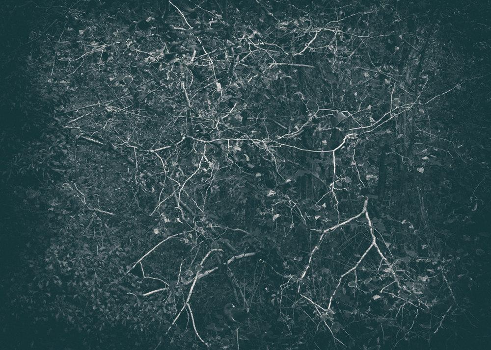 The Secret Language of Trees, week 2 October_20171013_0044_3_1.jpg