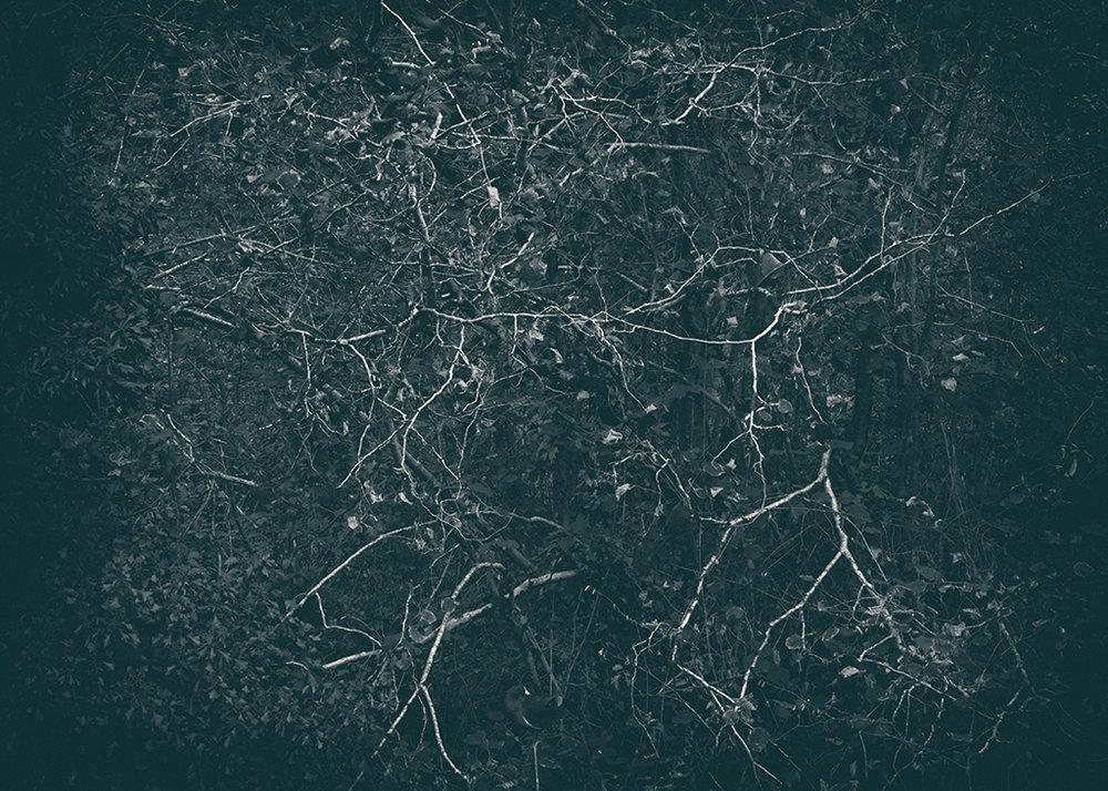 The Secret Language of Trees, week 2 October_20171013_0044_3_1BW toned.jpg