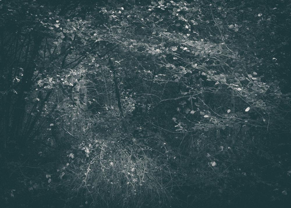 The Secret Language of Trees, week 2 October_20171013_0051_2_1.jpg