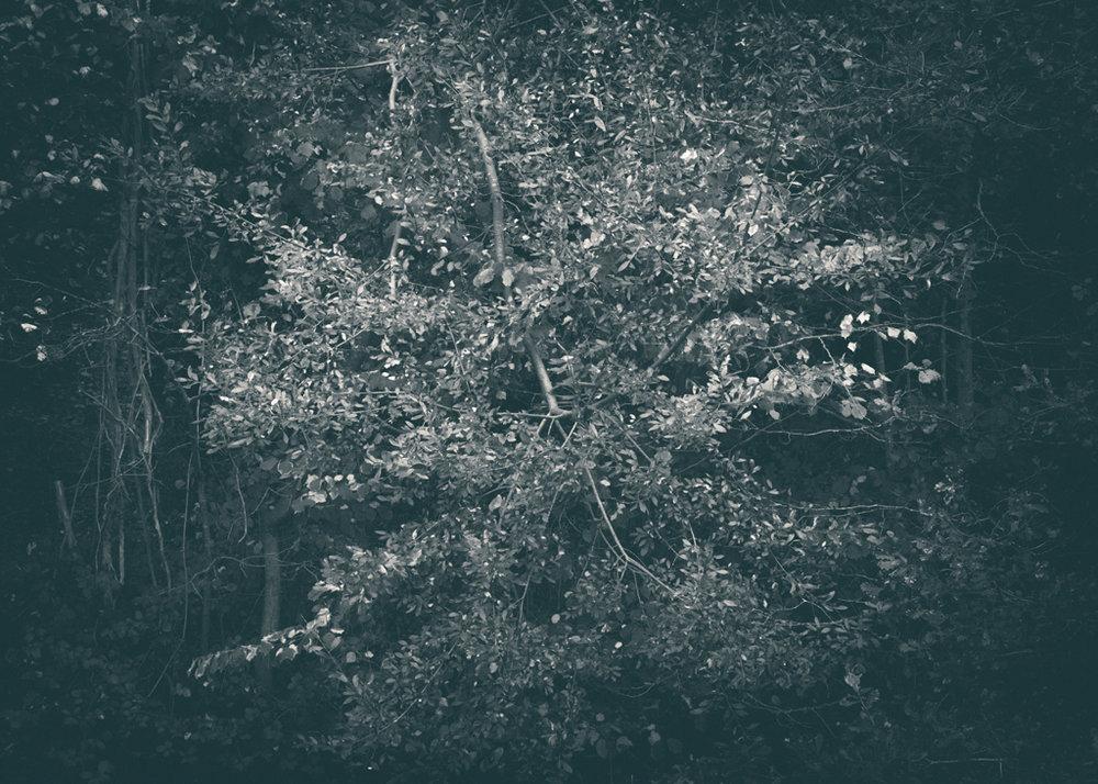 The Secret Language of Trees, week 2 October_20171013_0070_1_1.jpg